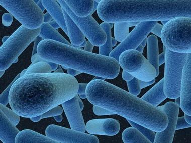 Бактерии.