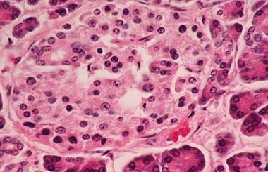 Цитоплазма.